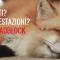 Firefox consuma troppa RAM? Ecco perchè